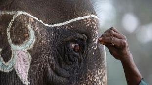 Futballozó elefántok – fesztivál Nepálban (videó)