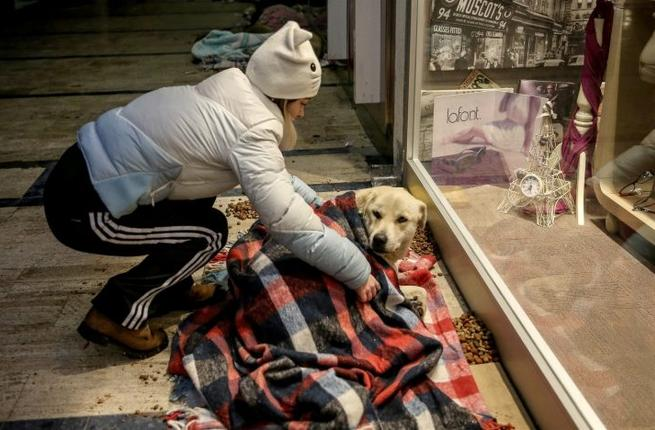 istanbul-mall-homeless-dogs