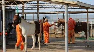 Vadnyugat: musztángon lovagolnak a rabok