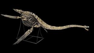 Nessie csontváza megvásárolható egy párizsi aukción – vagy majdnem az övé