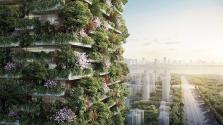 Napi 60 kg oxigént állít majd elő az első függőleges erdő Kínában
