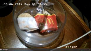 Egy 8. évében járó hamburger mindennapjai