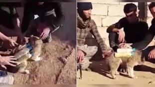 Macskákat küld robbantani az Iszlám Állam