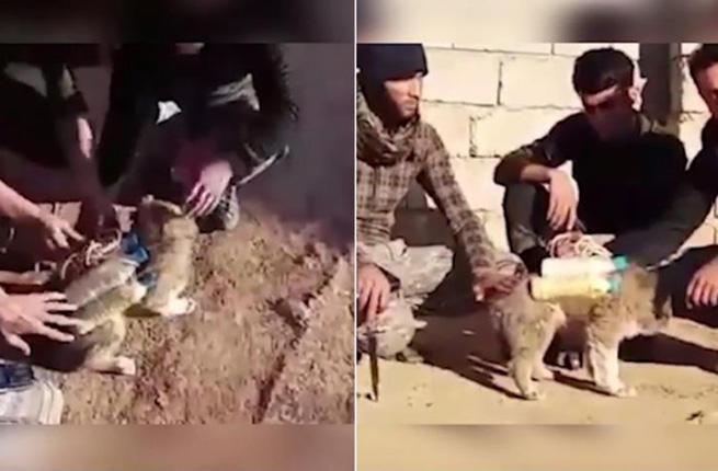 cat-bomb-iraq