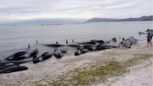 Harcban az idővel – a nagy delfinmentő akció (videó)