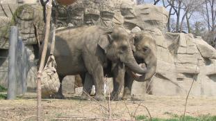 Valentin-nap az állatkertben – állatoknak és embereknek