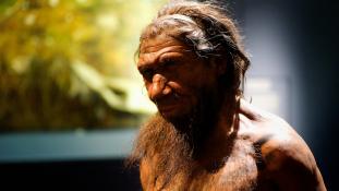 Gomba, moha, gyógynövények – ezt ették a spanyol Neander-völgyiek