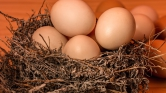 Saját teste melegével akar tojásokat kikölteni egy francia művész – videó