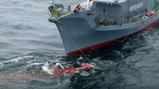 Egy japán hajóflotta 333 csukabálnát ejtett el tudományos kutatás címen az Antarktiszon