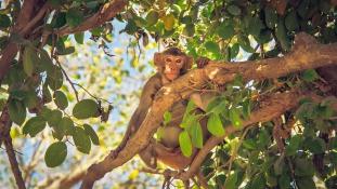 Majmokkal élő kislányt mentettek ki a dzsungelből Észak-Indiában – videó