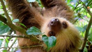 Lajhárokkal rendez pizsamapartit egy oregoni állatkert