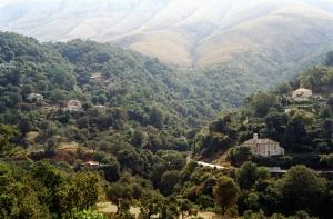 albania_forest_saranda_gjirokastra