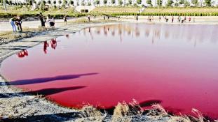 Mitől rózsaszínű egy tó vize? – videó
