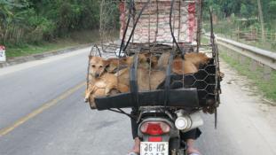 Nemcsak a kutyák fogyasztását büntetik Tajvanon – videó