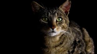 70 macska volt bezsúfolva egy házba New Yorkban