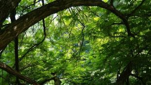 Több hete lehetett egy holttest egy fán Németországban, mire észrevették