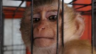 500 állat halt kínhalált négy év alatt, mégis kinyithat a horrorállatkert Angliában