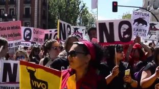 A tortúra nem kultúra: több ezren tüntettek a bikaviadalok ellen Madridban