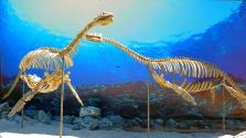 Ez a plioszaurusz akkora lehetett, mint egy autóbusz
