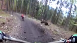 Feldühödött medve a biciklisták nyomában – videó