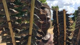 Egérből rablóhús – Malawi kedvence az egér egészben