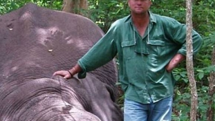 Lelőtt elefánt nyomta agyon a híres dél-afrikai vadászt