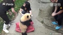 A kilenchónapos pandakislány imádja rózsaszín hintalovát – videó