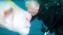 Barátság a tenger mélyén: egy japán búvár 25 éve áll különleges kapcsolatban egy hallal – videó