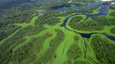 Vallási vezetők fogtak össze az esőerdők megmentéséért