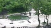 Így mentik meg a többiek a medencébe esett bébielefántot – videó