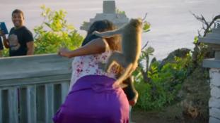 Tudatos tolvajok a makimajmok Bali szigetén – videó