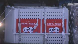 Megérkezett a két panda-nagykövet Berlinbe – videó