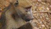 50 ezer ember maradt áram nélkül egy majom miatt