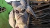 Démonfejű kecske született Argentínában