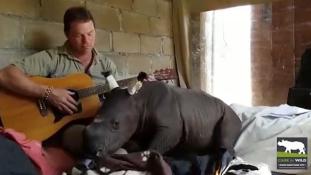 Bölcsődal a rinocéroszbébinek – videó