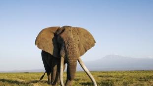 Jól ismert orvvadászt lőttek le Zimbabwében