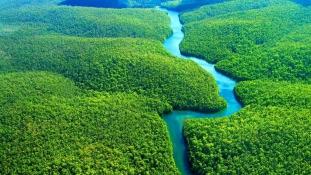 Közel 400 új fajt fedeztek fel az Amazonas-medencében két év alatt