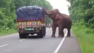 Éhes elefánt fosztott ki egy burgonyaszállító autót Indiában – videó