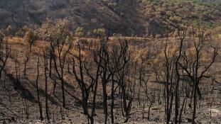 Újra óriási erdőtüzek pusztítanak Portugáliában – videó