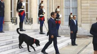 First Dog Párizsban – menhelyről érkezett az Elysée palotába Némó / videó