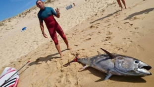 Puszta kézzel fogott 100 kilós tonhalat egy szörfös Franciaországban
