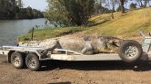 Ötméteres krokodilt lőttek fejbe Ausztráliában