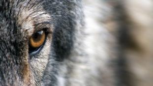 Farkasok ölhették meg a Görögországban eltűnt brit turistát