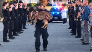Szívszorító búcsú egy hős rendőrkutyától