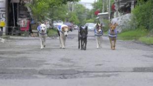 Okos mentőmellény kóbor kutyáknak – videó