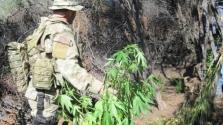A tűzvész miatt drágul a marihuána Kaliforniában – videó