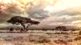 Afrikakutatás Magyarországon – átfogó könyv jelent meg a fekete földrészről