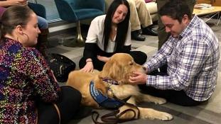 Kutyaterápia a lövöldözés sebesültjeinek Las Vegasban – videó