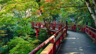 Levágott fejek és holttestek társaságában élt egy férfi Japánban