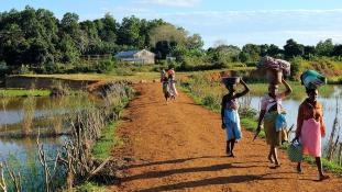Pestisjárvány Madagaszkáron